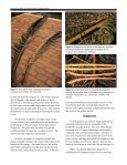 Fusarium Wilt of Canary Island Date Palm1 - University of Florida - Page 3