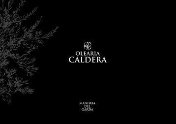 Untitled - Olearia Caldera