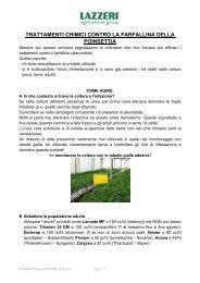 Consigli di coltivazione e difesa Poinsettie - Clamer Informa