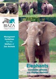 Elephants Elephants Wildpro Twycross Zoo
