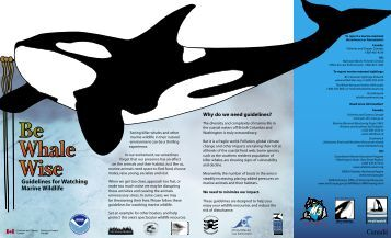 Be Whale Wise - Eagle Wing Tours