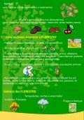 O que é a floresta?.pdf - Page 3