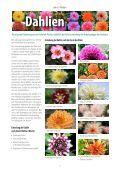 Dezember 2012 - Seite 4