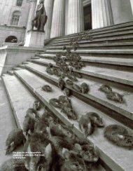 Una plaga de ratas fotografiada afuera de un edificio ... - diasiete.com
