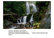 relative abundance and species diversity of amphibia at gunung kuli ...
