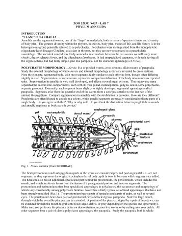 Lab 6: Annelida