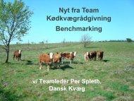 Dansk Kvæg kongres, Dansk Kødkvæg i vækst - LandbrugsInfo