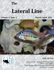 Lateral Line March 2011 - Hill Country Cichlid Club