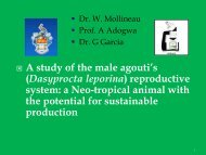 A study of the male agouti's (Dasyprocta leporina) reproductive ... - Inra