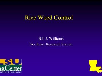 Rice Weed Control