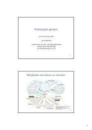 Prokaryota genom