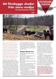 Att förebygga skador från stora rovdjur med boskapsvaktande hundar