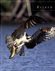 Return of the Fish Hawk - New Hampshire Fish and Game Department