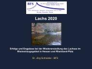 Monitoring Lachs 2020