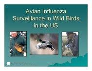 Avian Influenza Surveillance in Wild Birds in the US - Middle East
