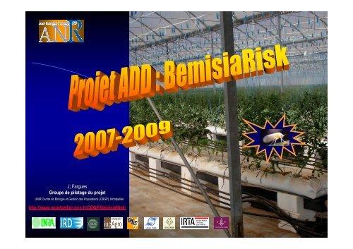 projet BemisiaRisk - INRA Montpellier
