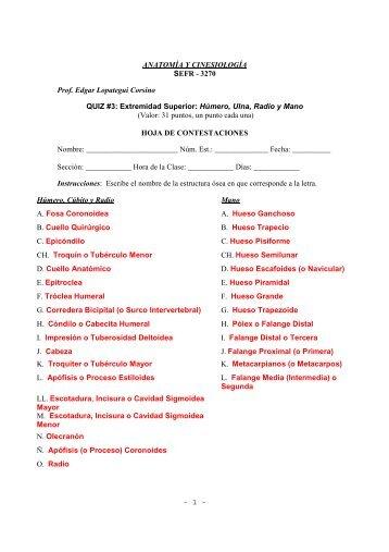 Extremidad Superior: Húmero, Ulna, Radio y Mano ... - Saludmed
