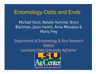 Entomology Odds and Ends, Mike Stout - Louisiana Agricultural ...
