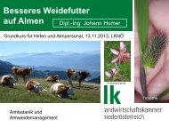 Besseres Weidefutter auf Almen - futterwiesenexpertehumer