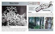 Ghost Antler - Species at Risk