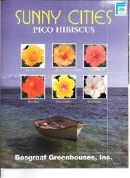 Sunny Cities PICO Hibiscus - Info Sheet (PDF) - ForemostCo