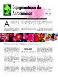 Copigmentação de Antocianinas - Biotecnologia
