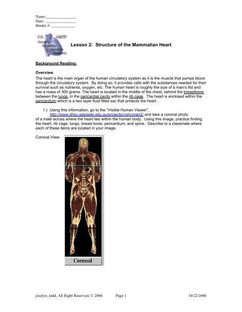 PDF Lesson 2: Structure of the Mammalian Heart - Cary Academy
