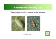 Identification of key pests & diseases