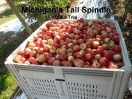 Michigan's Tall Spindle
