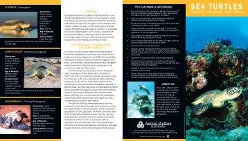SEA TURTLES - Animal Welfare Institute