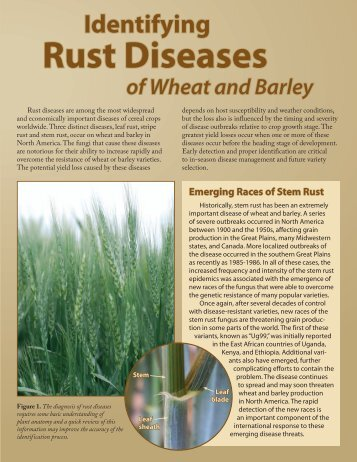 Rust Diseases - Agricultural Research Service