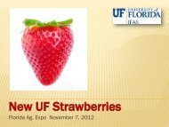 New UF Strawberries - Florida Ag Expo