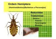 Ordem Hemiptera - Ufersa