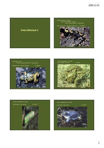Erdei élőhelyek 2.