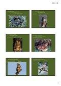 Erdei élőhelyek 2. - Page 2