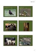 Erdei élőhelyek 2. - Page 3