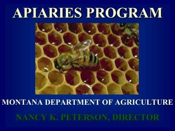 BEES IN MONTANA