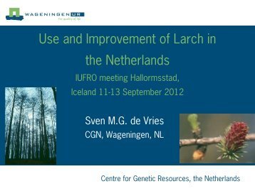 Use and Improvement of Larch in the Netherlands
