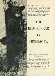 2378 Black Bear in Minnesota The - webapps8