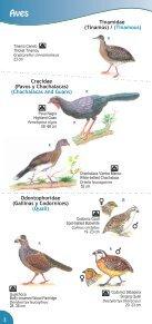 Guía de Aves Parque Nacional Montecristo - Ministerio de Medio ... - Page 4