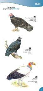 Guía de Aves Parque Nacional Montecristo - Ministerio de Medio ... - Page 5