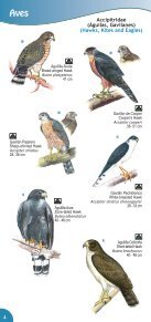 Guía de Aves Parque Nacional Montecristo - Ministerio de Medio ... - Page 6