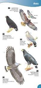 Guía de Aves Parque Nacional Montecristo - Ministerio de Medio ... - Page 7