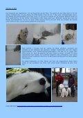 Bericht von Conny Büttner über ihre Teilnahme am ... - IG Samojede - Seite 6