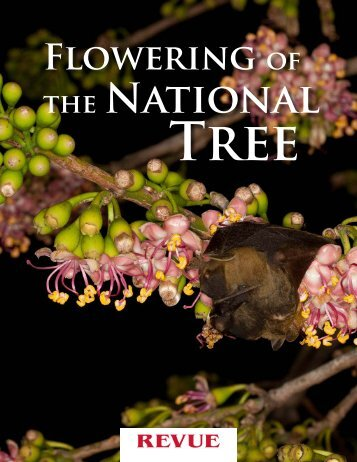 Flowering Of National The Tree - Maya Archaeology