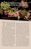 Flowering Of National The Tree - Maya Archaeology - Page 2