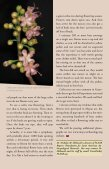 Flowering Of National The Tree - Maya Archaeology - Page 3