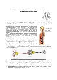 Introducción al estudio del la anatomía macroscópica