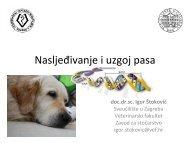 Nasljeđivanje i uzgoj pasa - HKS-a