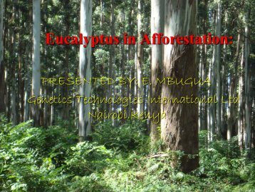 Eucalyptus in Afforestation: - total raffinage marketing